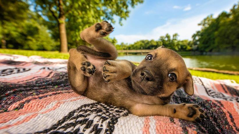 Wuff!: Das sind die besten Hundefotos des Jahres 2018