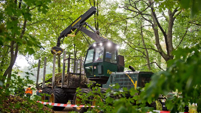 Hambacher Forst: Polizei setzt Räumung von Baumhäusern fort