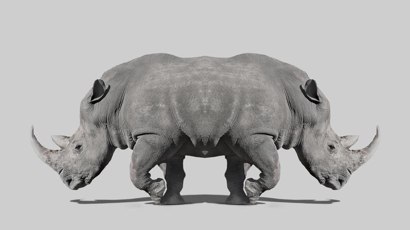 Claas Relotius: the rhinozerus in the room