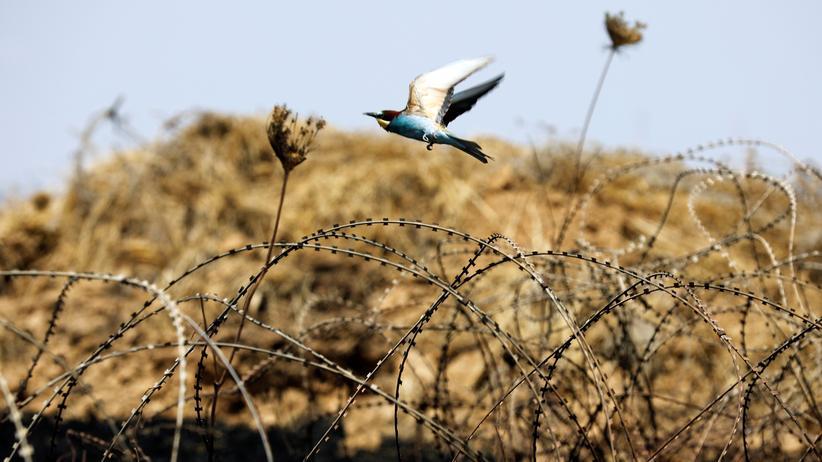 Frieden: Das größte aller Geschenke