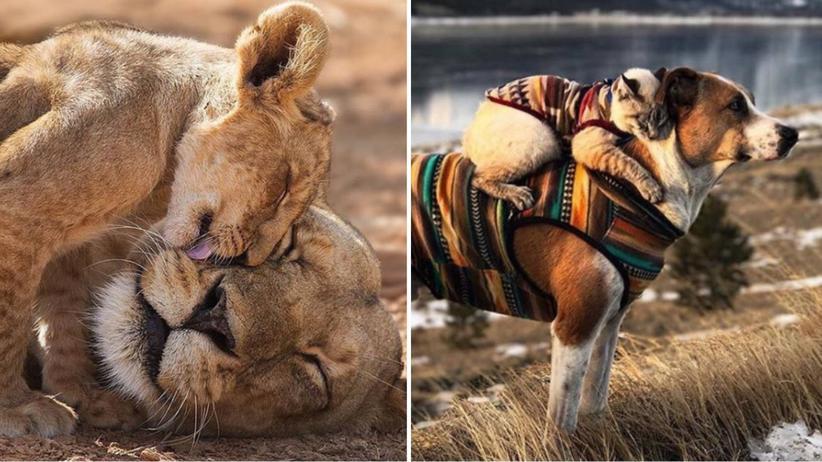 Best of ze.tt: Wenn Tiere sich lieben
