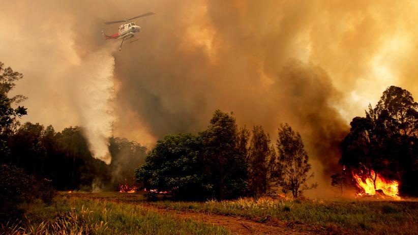 Buschfeuer: Einsatzkräfte kämpfen im australischen Bundesstaat New South Wales gegen die verheerenden Buschfeuer.