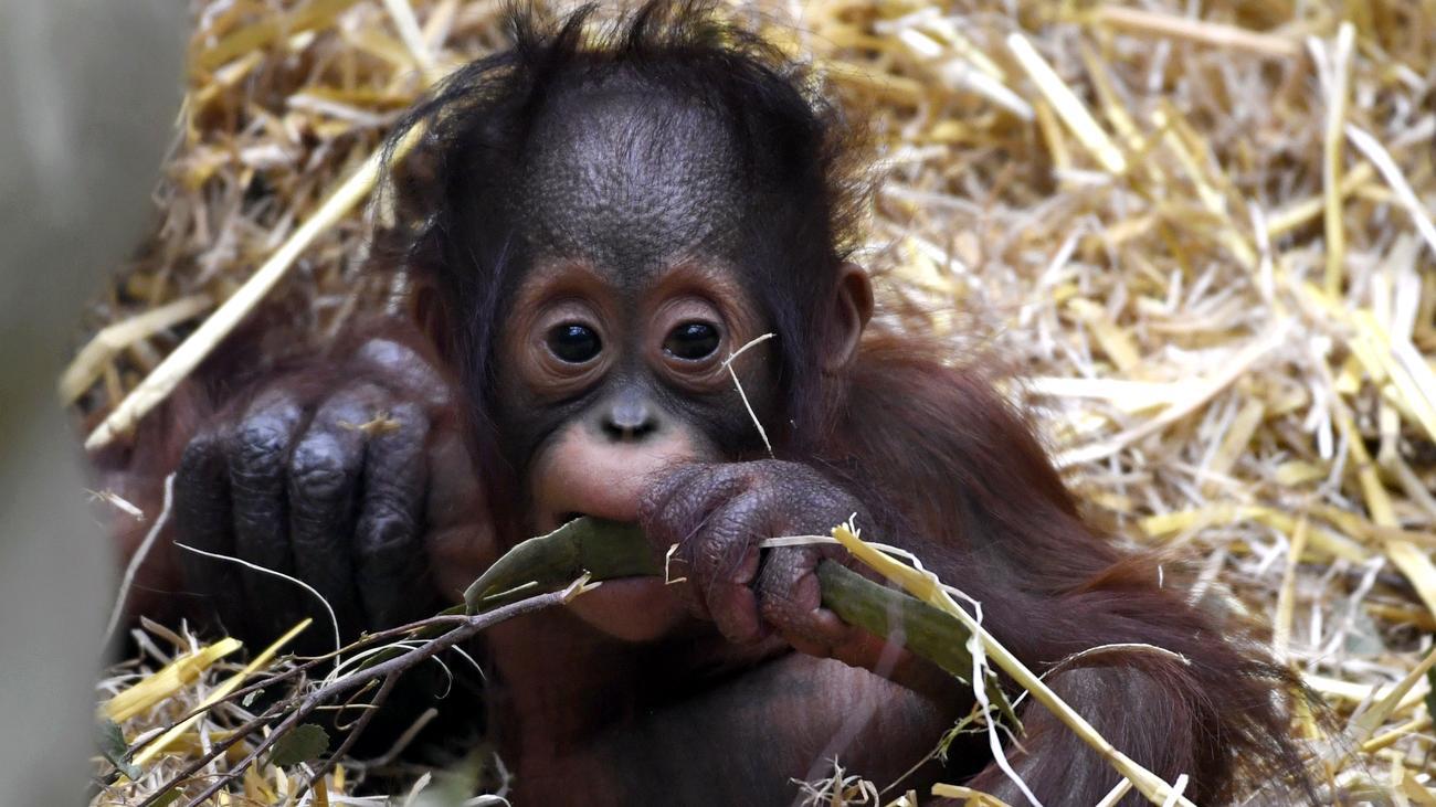 kölner zoo rabatt mai 2021