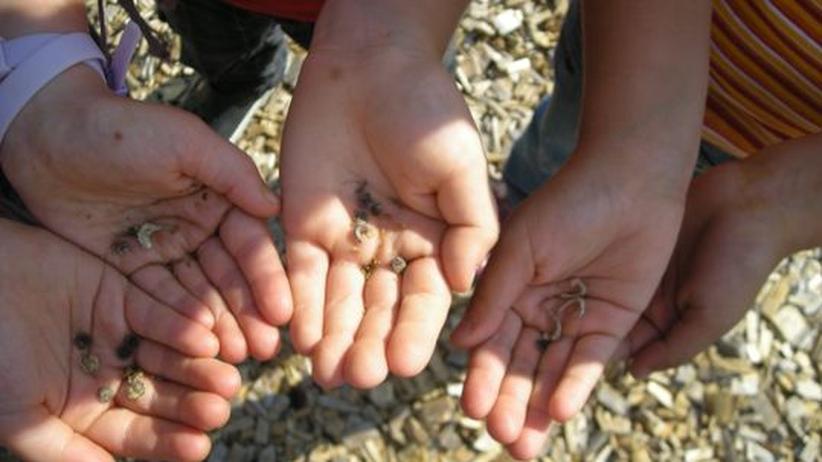 Schulgarten: Unterricht im Gemüsebeet