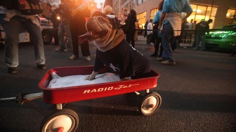 Klimasünder: Hund oder Auto?