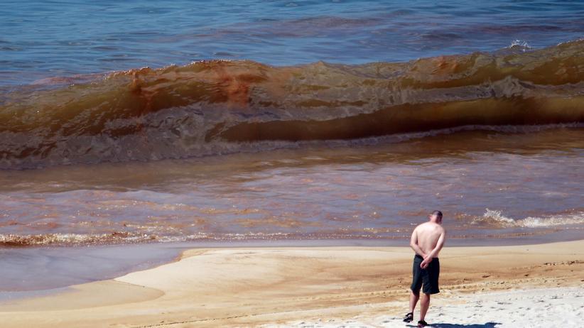 Ölpest im Golf von Mexiko: Die Bucht der vergifteten Seelen