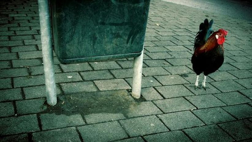 Fernsehkritik: Peter Scholl-Latour und das tote Huhn