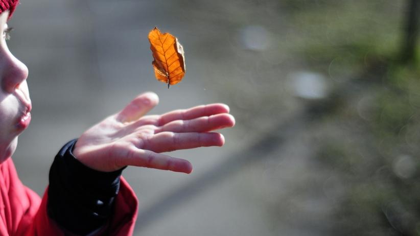 Willemsens Jahreszeiten: Der Herbst ist da – die Dreimonatsbilanz