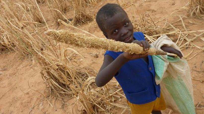 Afrika: Niger droht Hungerkrise