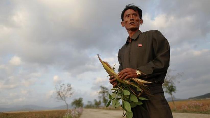 Nordkorea: Die Archivaufnahme von 2011 zeigt den Leiter eines nordkoreanischen Genossenschaftsbauernhofs.