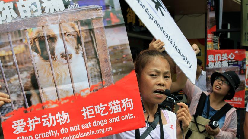 Chinesische Tierschutzaktivisten