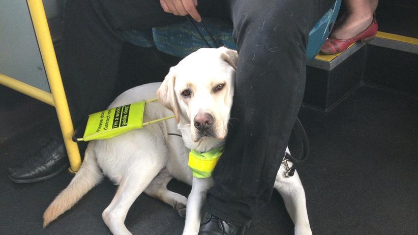 Blindenhund: Wegweiser auf vier Beinen