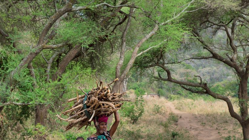 Ziel 7: Zugang zu sauberer Energie: Energieberatung im Miombowald