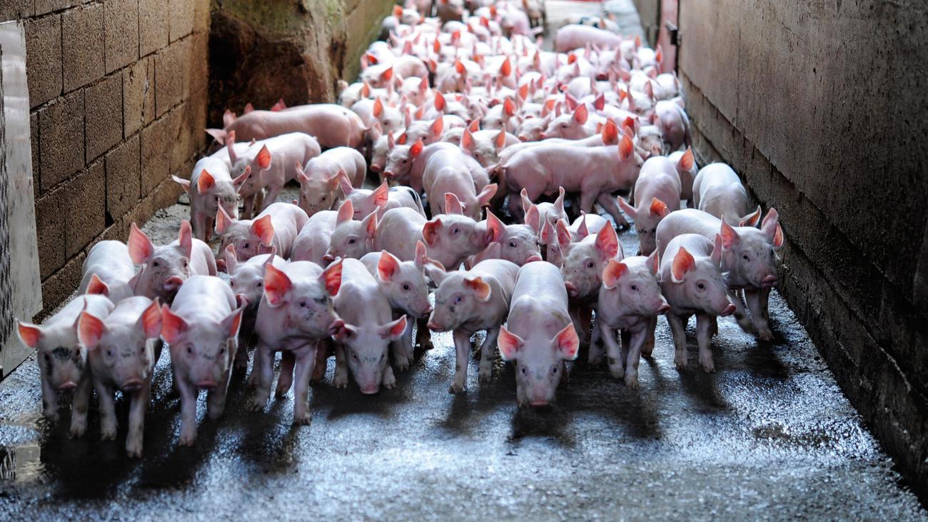 Vegetarier partnersuche schweiz