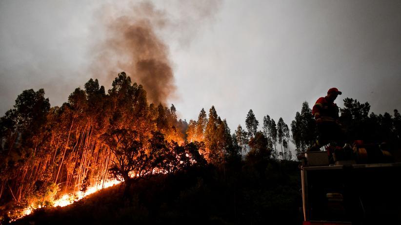 Waldbrände in Portugal Zahl der Toten steigt auf 62 - 2000 Rettungskräfte im