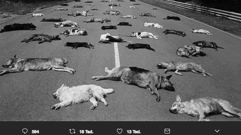 """Ausgesetzte Haustiere: Die Geschichte hinter dem """"Foto der Schande"""""""