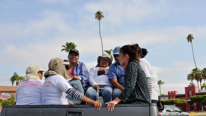 """Mexiko: Auf dem Pick-up fahren die """"Rastreadoras de El Fuerte"""", die Spurensucherinnen von El Fuerte, zu einer Suchaktion aus der Stadt."""