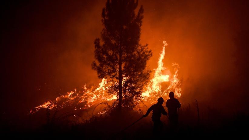 Portugal: 1.800 Feuerwehrleute kämpfen gegen Waldbrände