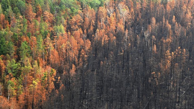 Sibirien: Russische Forstverwaltung erklärt Waldbrände für gelöscht