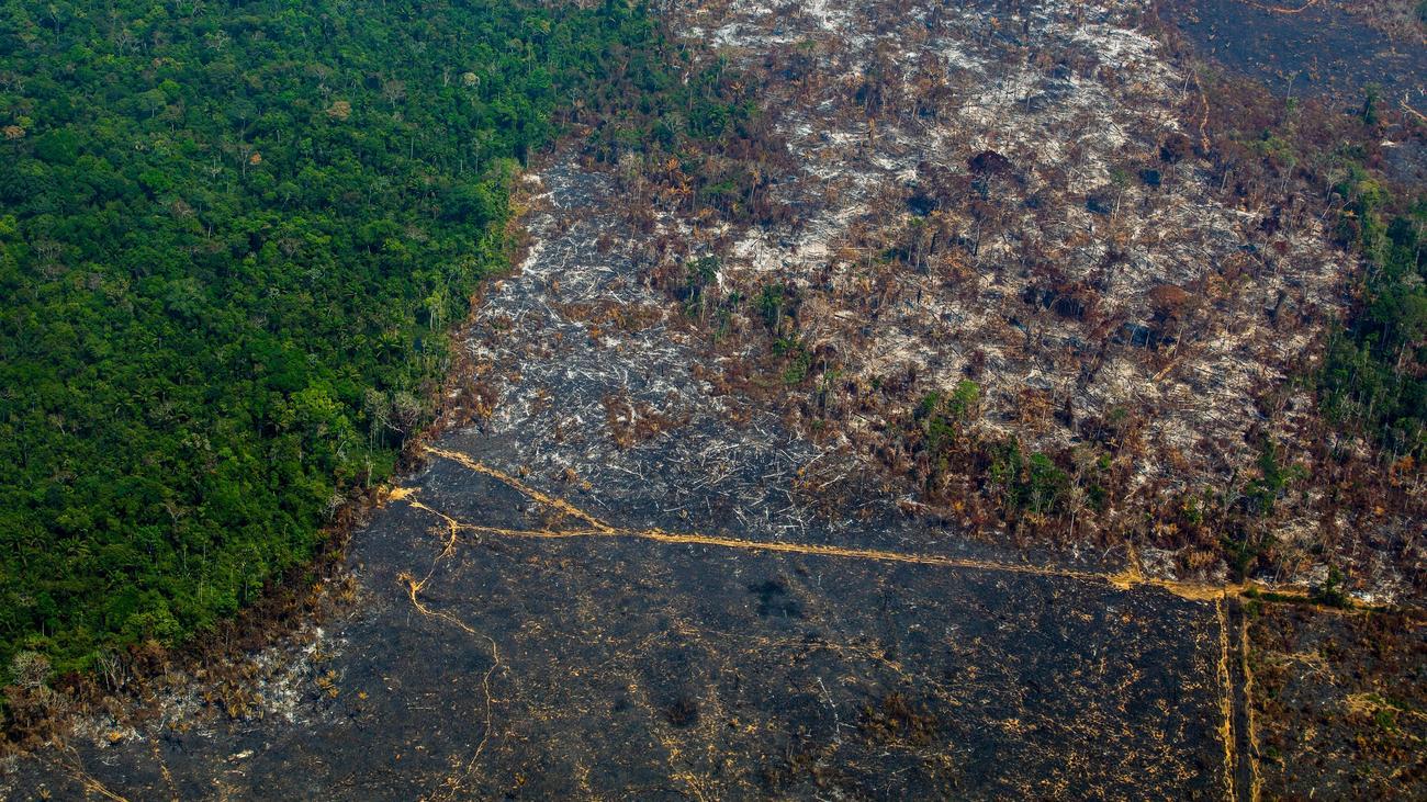 Amazonas: Abholzung im Amazonasgebiet steigt um 85 Prozent