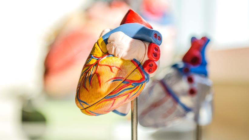 """Herztransplantation: """"Bei Regen denken manche, dass ihre Chance auf ein Spenderherz steigt"""""""
