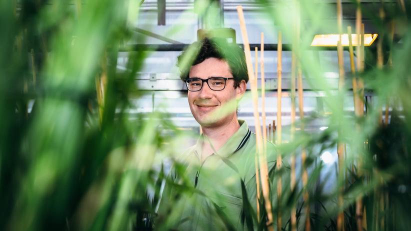 Viruserkrankungen in Getreide: Wie grüne Gentechnik dem Getreideanbau helfen könnte
