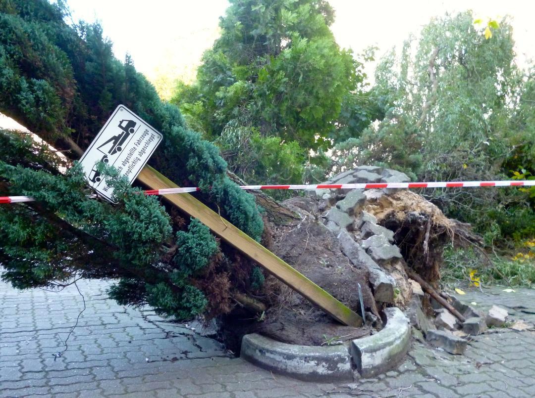Widerrechtlich abgelegte Bäume dürfen umständehalber noch liegen bleiben.