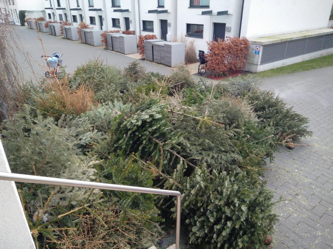 Eine Impression der Post-Tannenbaum-Zeit. Gesehen im Knickweg in Winterhude