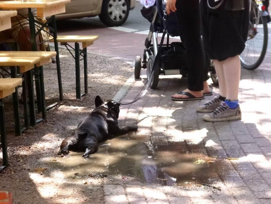 Nach dem durstigen Hund auf dem Sofa: heute sein Kollege, der die gefundene Pfütze offensichtlich um keinen Preis verlassen will...