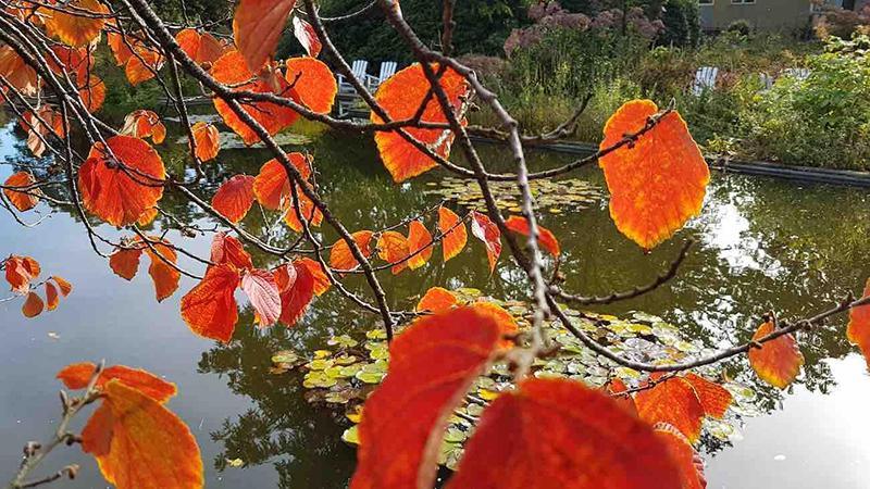 Herbst in Planten un Blomen