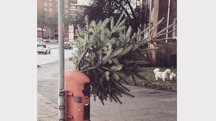 »Innovative Streetart auf dem Radweg«; Ist der Baum nun im Eimer? Auf jeden Fall nicht mehr im Wohnzimmer.