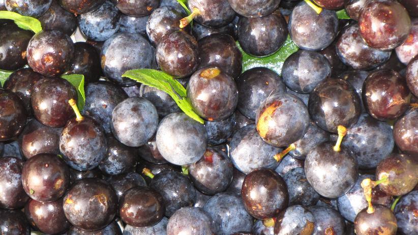 Wilde Küche: Schlehen mit Korn machten den Matrosen froh
