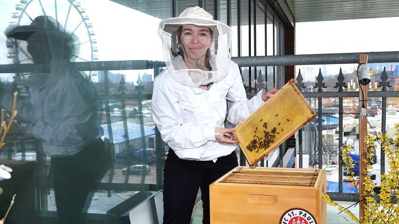 Bienen am Millerntor: Hamburg ist braun-gelb!