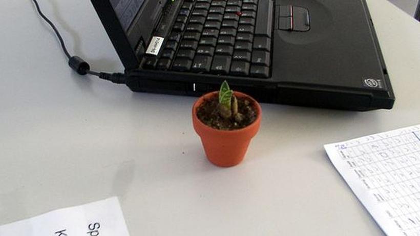Arbeitsplatz Diese Pflanzen Uberleben In Jedem Buro Zeit Online