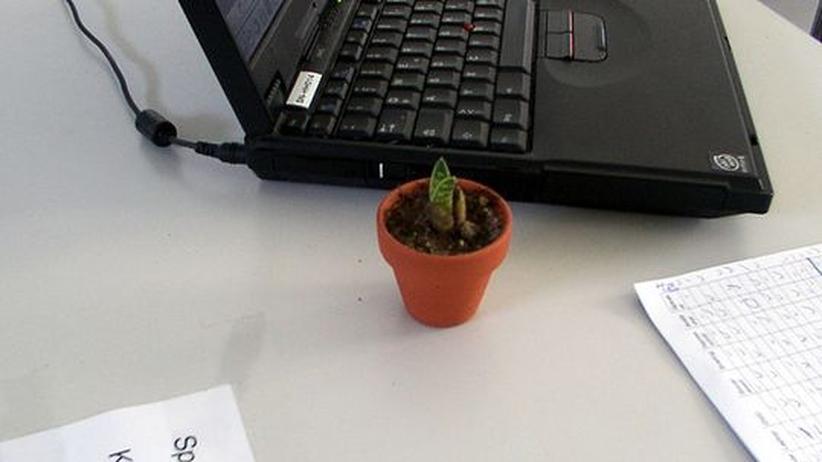 arbeitsplatz diese pflanzen berleben in jedem b ro zeit online. Black Bedroom Furniture Sets. Home Design Ideas
