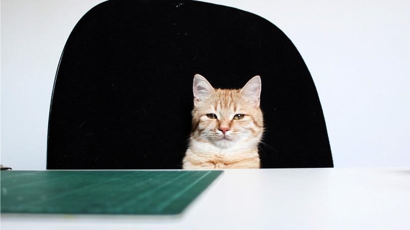 Tierfotos im Büro: Ooohhh, wie süß!!