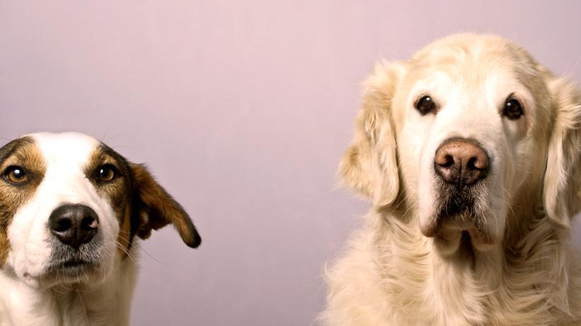 "Tiere am Arbeitsplatz: ""Hunde im Büro senken den Stresslevel"""