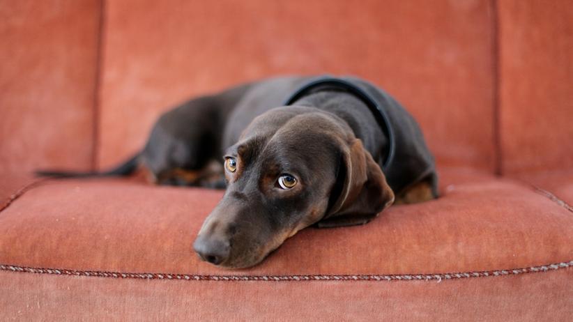 Tierpsychologe: Wuffi macht jetzt Therapie