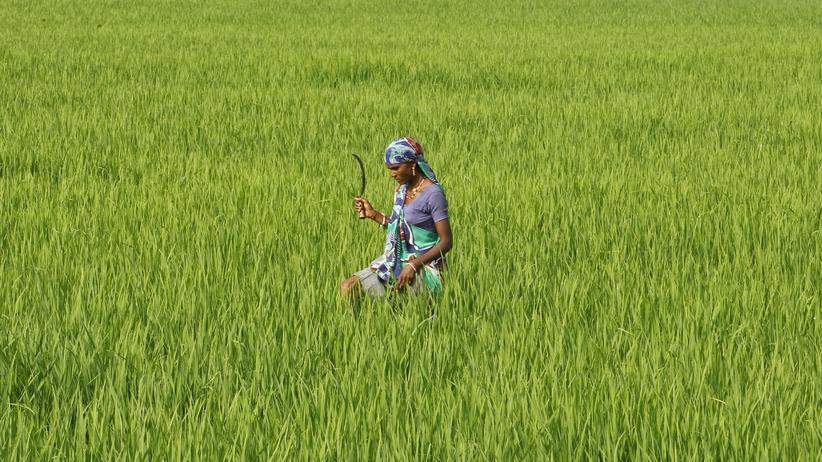Eine Frau arbeitet auf einem Feld in Indien: Hätten Frauen gleichberechtigten Zugang zum Arbeitsmarkt, würde die Weltwirtschaft um 28 Billionen Dollar wachsen.