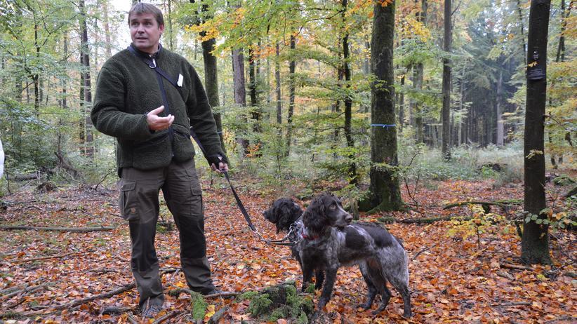 Wie aus dem Bilderbuch: Eckard Freist arbeitet als Förster in einem Friedwald.