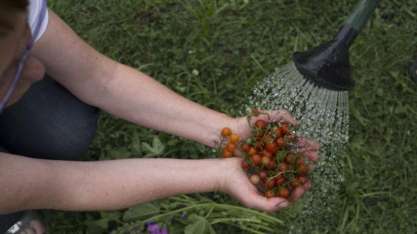 Menschen mit Handicap: Wer Gartenbauwerker ist, kann später auch noch Gärtner werden.