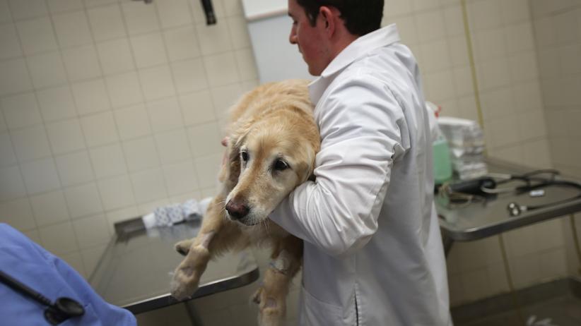 Tiermedizin: Immer mehr Tierärzte beklagen Überstunden und Gehälter unterhalb des Mindestlohns.
