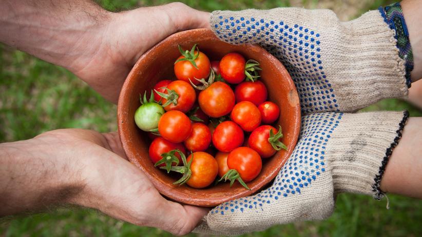 Diätassistenten: Gesund ernähren – aber wie?