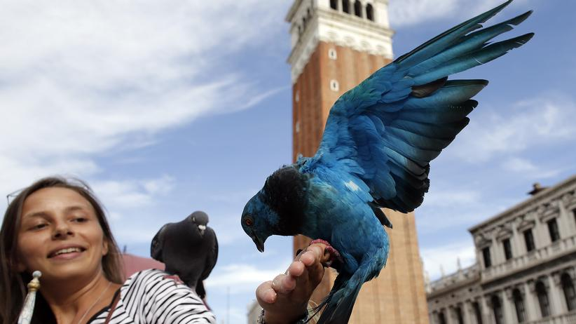 Architektur-Biennale: Venedig, die Biennale der Bescheidenheit