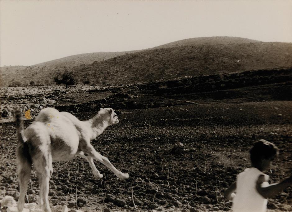 1951, Negev-Wüste mit Kamel und Miriam Kremins Sohn Joel