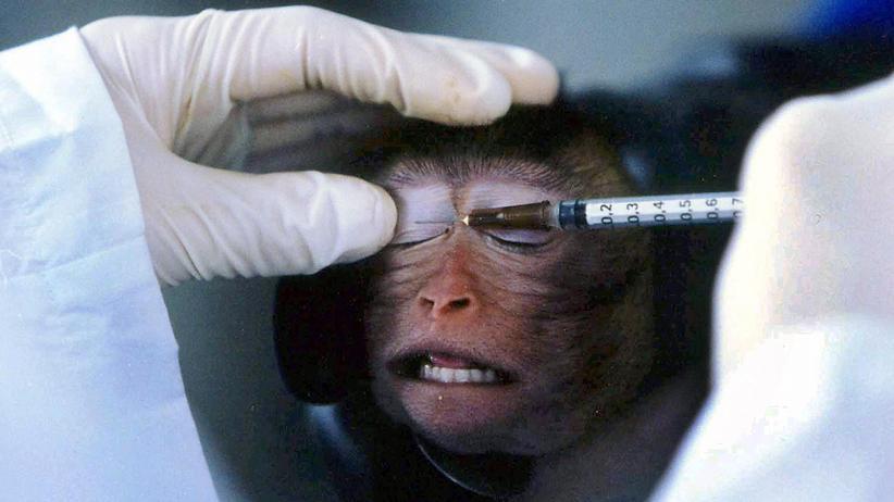 Tierversuche: Stoppt das Gemetzel!