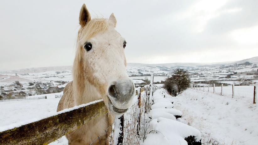Pferde: Was ist Reiten?