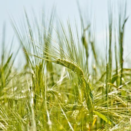"""""""Against the Grain"""": """"Den Barbaren ging es besser"""""""