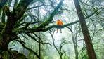 Umweltpolitik: Pappkameraden des Ökopaternalismus