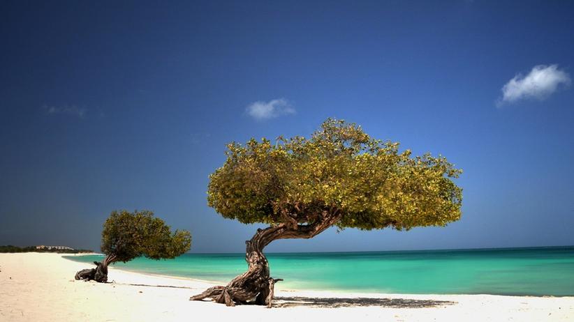 """Aruba-Filmfest : """"Richard Gere? Man bezichtigte mich, ein Double engagiert zu haben"""""""